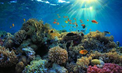 los-arrecifes-evitan-danos-por-us-96-millones-en-rd