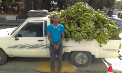 Ladron de plátanos