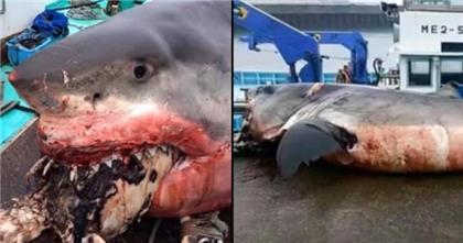 67822-tiburon