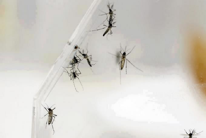 El dengue golpea con más virulencia de lo normal