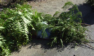 Cadaver accidente en pavimento