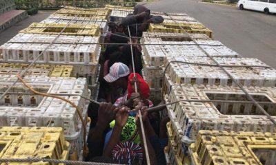capturan-a-20-haitianos-que-eran-trasladados-en-huacales-de-pollos-en-dajabon