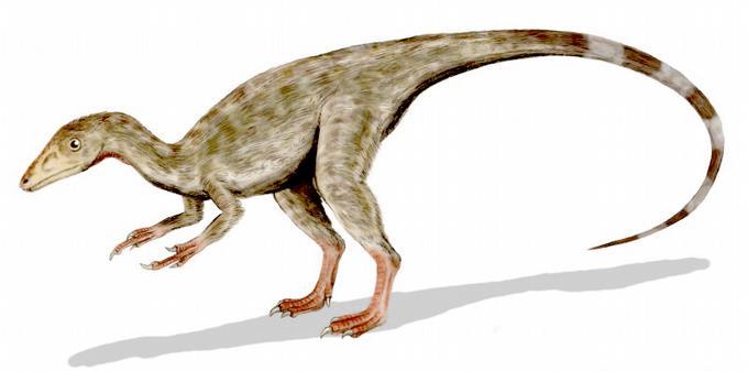 ponen-a-la-venta-en-rusia-huevo-de-dinosaurio-de-mas-de-65-millones-de-anos
